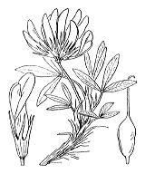 Photographie n°876.png du taxon