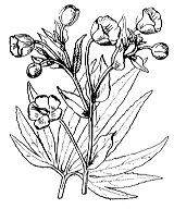 Photographie n°89.png du taxon