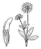 Photographie n°892.png du taxon