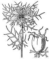 Photographie n°93.png du taxon