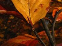 Photographie n°jlt005303 du taxon