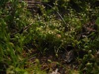 Photographie n°jlt007118 du taxon