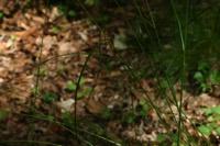 Photographie n°jlt009890 du taxon