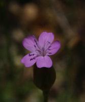 Photographie n°jlt009914 du taxon