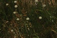 Photographie n°jlt011017 du taxon
