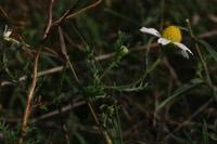 Photographie n°jlt013112 du taxon