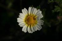 Photographie n°jlt013555 du taxon
