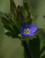 Photographie n°jlt014230 du taxon