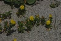 Photographie n°jlt015209 du taxon