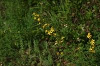 Photographie n°jlt016068 du taxon