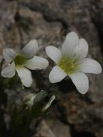 Photographie n°jlt016158 du taxon