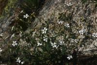 Photographie n°jlt016341 du taxon