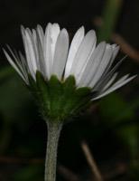 Photographie n°jlt016612 du taxon