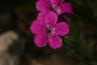 Photographie n°jlt016642 du taxon