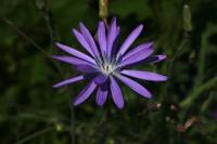 Photographie n°jlt016880 du taxon