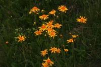 Photographie n°jlt017120 du taxon