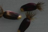 Photographie n°jlt018157 du taxon