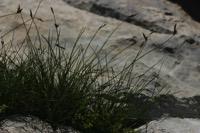 Photographie n°jlt018359 du taxon