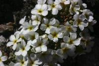 Photographie n°jlt018913 du taxon