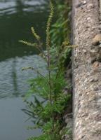 Photographie n°jlt019484 du taxon