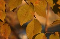 Photographie n°jlt019652 du taxon
