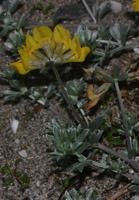 Photographie n°jlt019988 du taxon