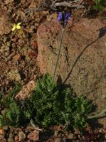 Photographie n°jlt020162 du taxon