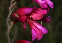 Photographie n°jlt021138 du taxon