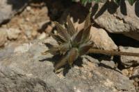 Photographie n°jlt021759 du taxon