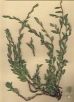 Photographie n°jlt022828 du taxon
