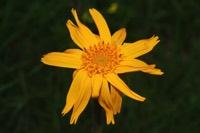 Photographie n°jlt022915 du taxon