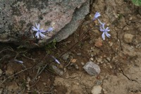 Photographie n°jlt024165 du taxon