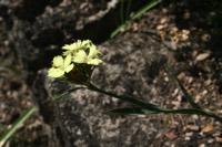 Photographie n°jlt024629 du taxon