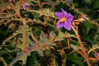 Photographie n°jlt025627 du taxon