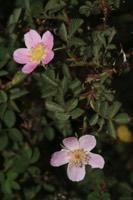 Photographie n°jlt025651 du taxon
