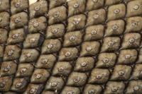 Photographie n°jlt026280 du taxon