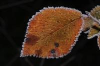 Photographie n°jlt028153 du taxon