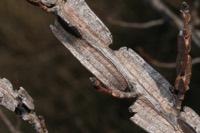 Photographie n°jlt028170 du taxon