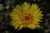 Photographie n°jlt028357 du taxon