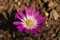Photographie n°jlt029564 du taxon