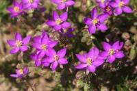Photographie n°jlt030499 du taxon