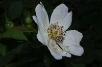 Photographie n°jlt031445 du taxon