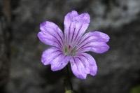 Photographie n°jlt035564 du taxon
