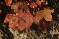 Photographie n°jlt036192 du taxon