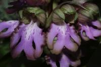 Photographie n°jlt037962 du taxon