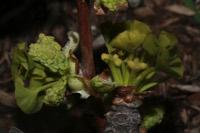 Photographie n°jlt038356 du taxon