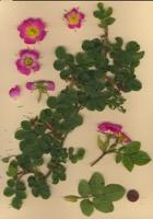 Photographie n°jlt040735 du taxon
