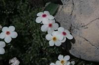 Photographie n°jlt041255 du taxon