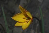 Photographie n°jlt043265 du taxon