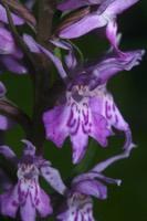 Photographie n°jlt043685 du taxon